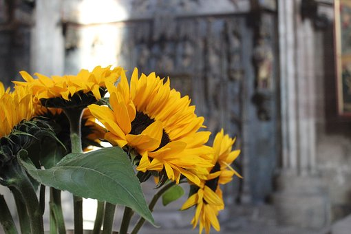 Sunflower, Bouquet, Yellow, Flowers, Vase, Decoration