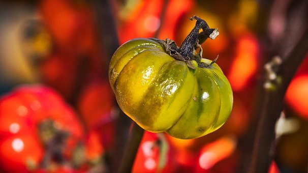 Gourd, Pumpkin, Red, Green, Small, Autumn Decoration