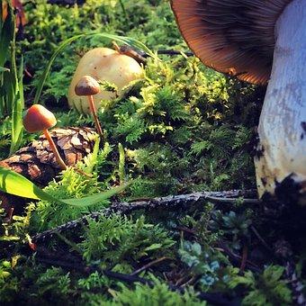 Mushroom, Autumn, Mushrooms, Forest, Forest Floor