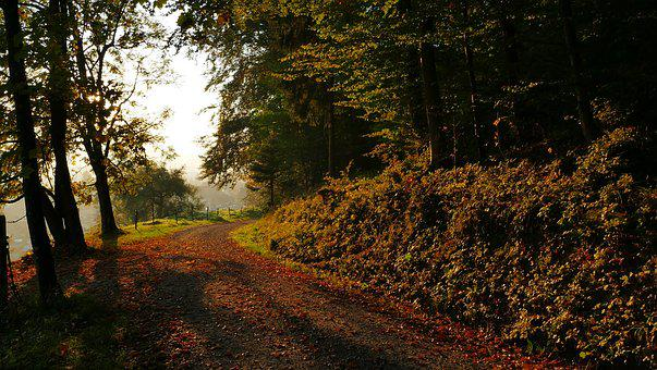 Nature, Landscape, Autumn, Leaves, Forest, Trees, Sun