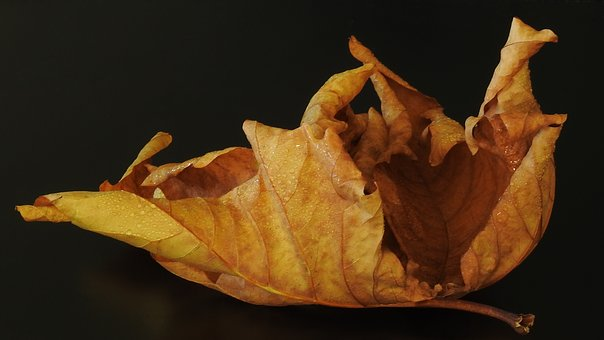 Leaf, Autumn, Brown, Yellow, Individually, Bright