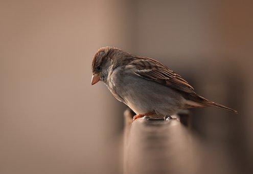 Bird, Kuş, Serçe, Macro, Kuşlar, Birds, Vahşi, Wild