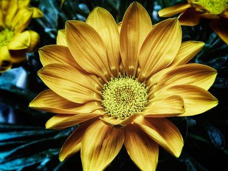 Blossom, Bloom, Flower, Nature, Plant, Flora, Bloom