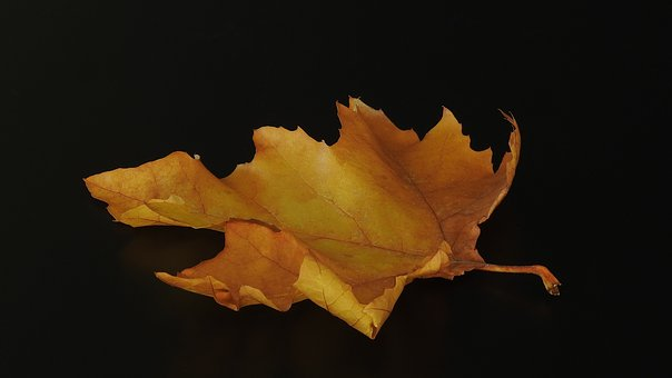 Leaf, Autumn, Brown, Yellow, Bright, Close Up