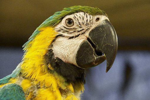Parrot, Bird, Colored, The Tropical, Dappled, Cheerful
