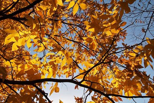 Tree, Foliage, Autumn, Colored, Colors Of Autumn