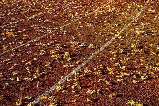 Athletics, Competition, Sport, Career, Run, Race