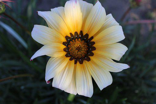 Flower, Autumn, Nature, Garden, Close Up, Bloom, Plant