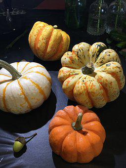 Pumpkins, Gourd, Autumn, Thanksgiving, Harvest, Food