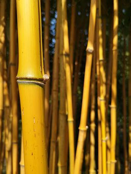 Bamboo, Yellow, Garden, Woody, Texture, Tall, Natural