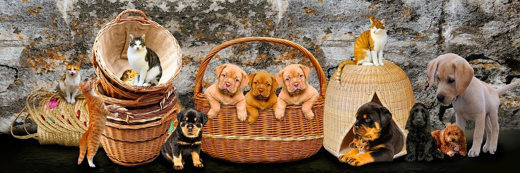 Animals, Dogs, Cat, Pets, Puppy, Young Animals, Kitten