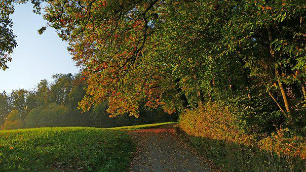 Landscape, Autumn, Nature, Forest, Tree, Leaves, Sun