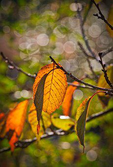 Leaf, Autumn, Branch, Leaves, Nature, Fall Color