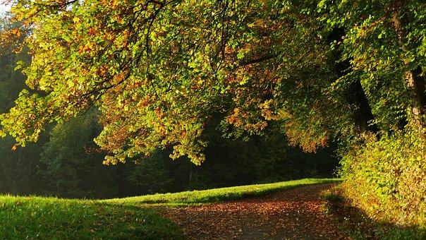 Landscape, Autumn, Nature, Tree, Leaves, Light, Away