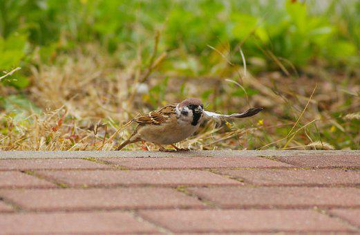 The Sparrow, Mazurka, Bird, Municipal, Pen, Walkway
