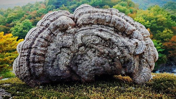 Mushroom, Nature, Medicinal Mushroom, Oak Mushrooms