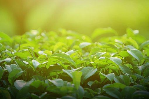 Background, Green, Leaves, Leaf, Spring, Tree, Nature