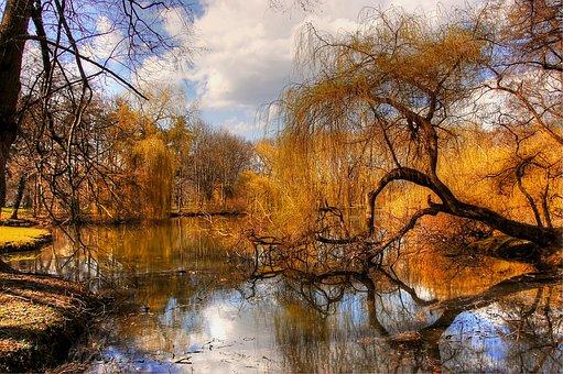 Braunschweig, Park, Nature, Landscape, Germany, Leaves