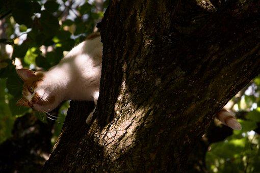 Cat On Tree, Young, Climb, Animal, Orange, Creature