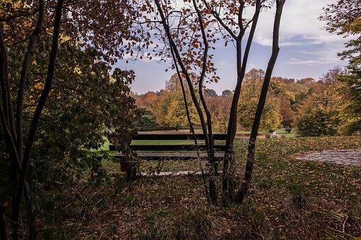 Autumn, Park Bench, Nature, Leaves, Park, Landscape