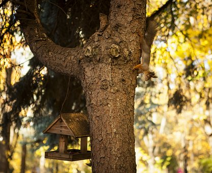 Park, Squirrel, Feeder, Autumn, Tree, Nature, Rodent