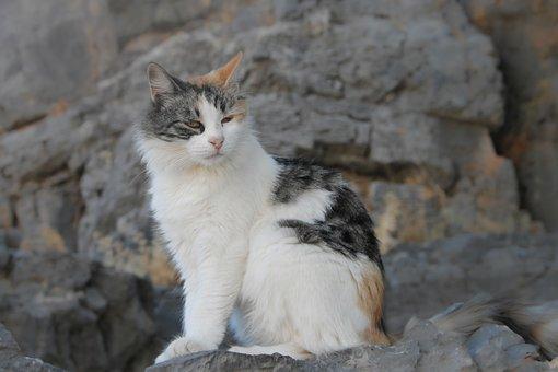 Cat, Domestic Cat, Pet, Animal, Animal World, Kitten