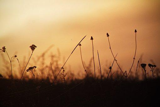 Autumn, Plants, Nature, Grass, Spider Web