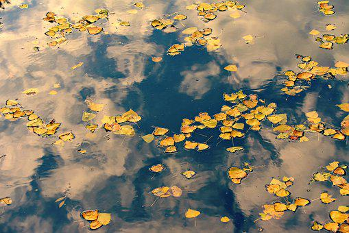 Autumn Leaves, Water, Cloud Reflections, Pond, Colorful