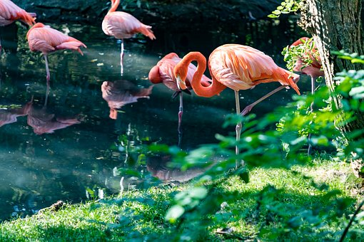 Flamingo, Bird, Animal, Colorful, Feather, Pride, Pink