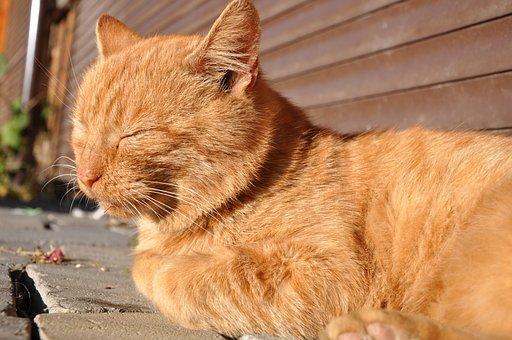 Cat, Red-headed Cat, Outdoor Cat, Cat Is