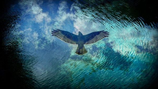Bird, Predator, Reflection, Water, Flight, Eagle