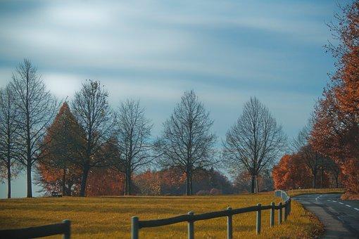 Nature, Landscape, Autumn, Trees, Road, Sky, Fence