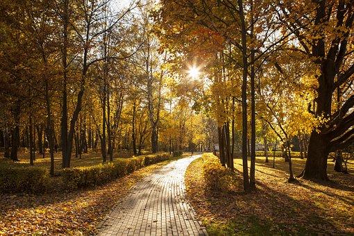Autumn, Light, Sun, Color, Bright, Forest, Park, Trees