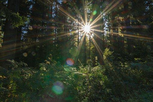 Sonnenstern, Sun, Forest, Nature, Autumn, Sky, Light