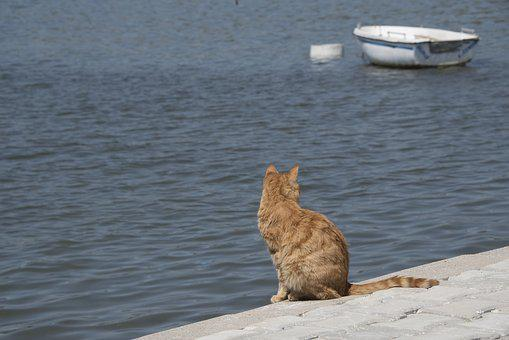 Cat, Sea, Ocean, Seaside, Tranquility, Boat