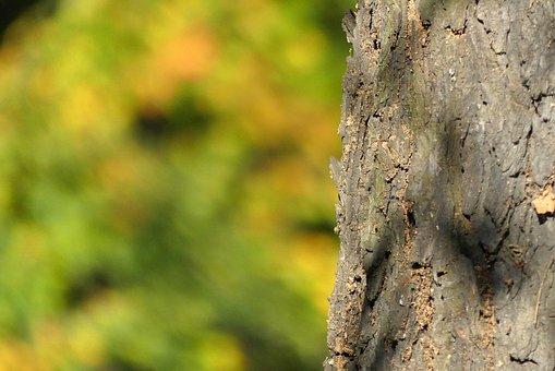 Tree, Trunk, The Bark, Autumn, Nature, Konary, Closeup
