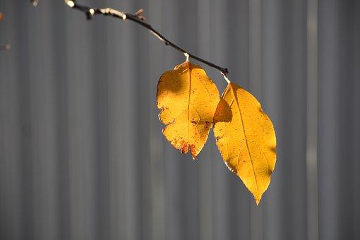 Autumn, Apple Tree, Branch, Leaves, Yellow, Plant