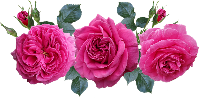 Roses, Flowers, Garden, Arrangement, Romantic, Nature