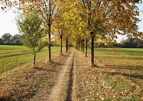Autumn, Yellow, Path, The Trail, Foliage, Fallen