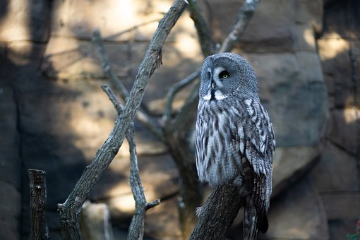 Owl, Eagle Owl, Bird, Animal, Animal World, Birds, Zoo