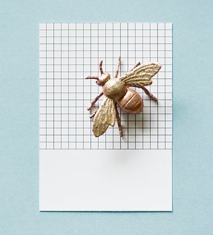 Abstract, Animal, Background, Blue, Brown, Bug, Card