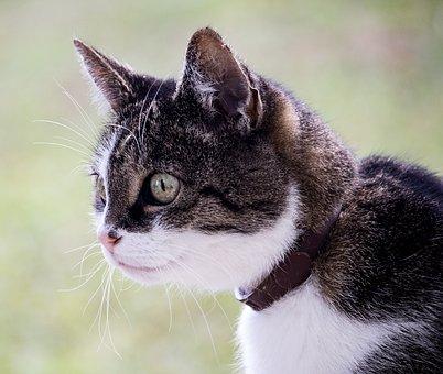Cat, Domestic Cat, Pet, Animal, Animal World, Mieze