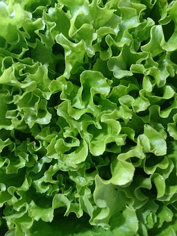 Lettuce, Green, Diet, Close Up, Form, Food, Summer
