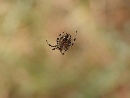 Spider, Cobweb, Forest, The Web, Hotel, In The Fall