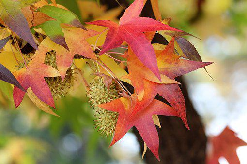 Colorful Leaves, Branch, Tree, Autumn, Season, Nature