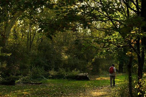 Landscape, Lake, Park, Feyssine, Lyon, Villeurbanne