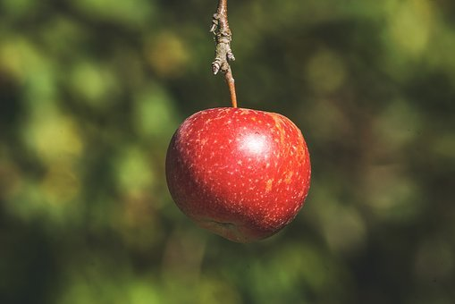 Apple, Red, Ripe, Fruit, Healthy, Vitamins, Food, Sweet