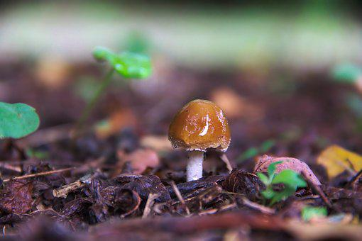 Fungus, Nature, Earth, Green, Mushrooms, Forest