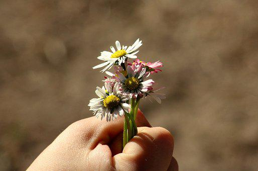 A Small Bunch, Daisies, Handle Of The Child, Flowers