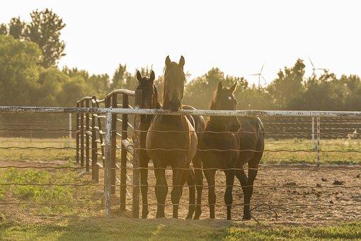 Horses, Fence, Country, Horse, Animal, Oklahoma